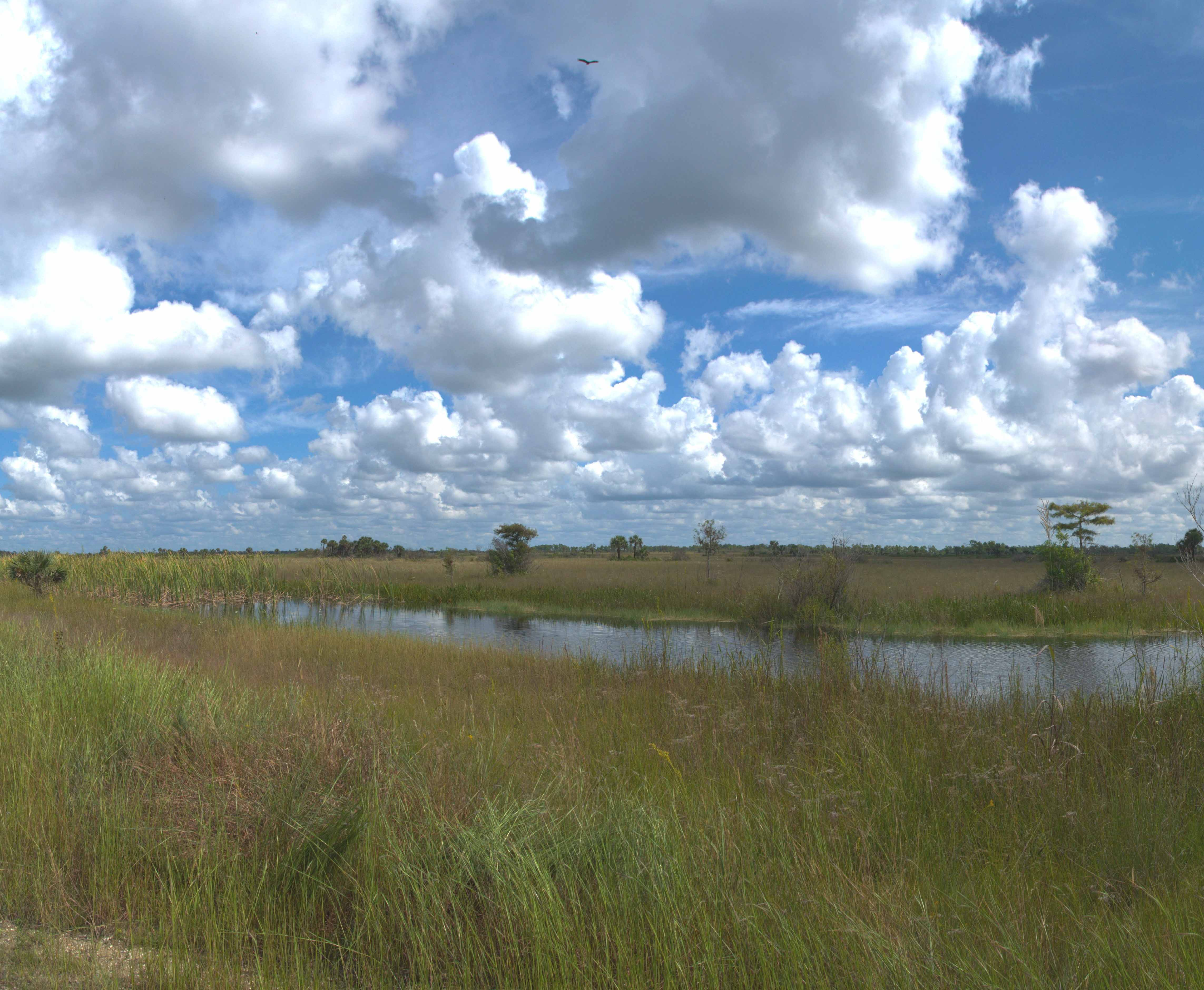 View of a river in the Everglades.