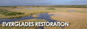 Everglades Web Ad