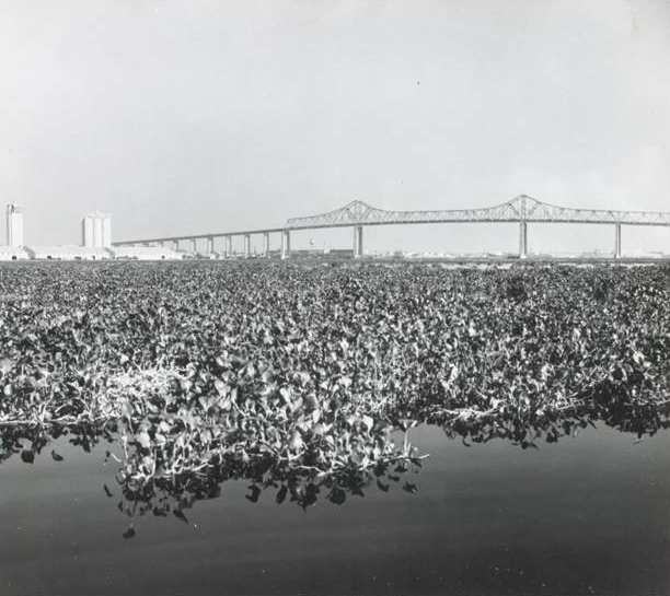 st johns river, 1968