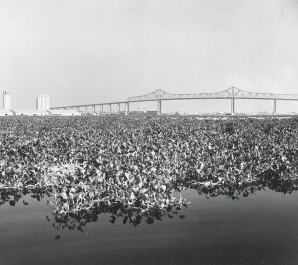 st johns river, 1968